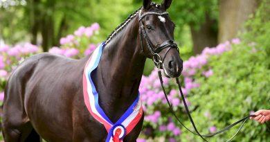 Viele Lichtblicke bei den Holsteiner Pferdetagen